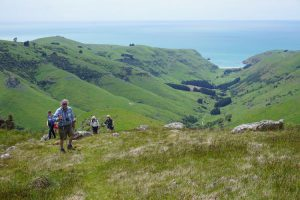 Banks Peninsula and The Wildside